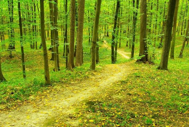 Ein weg ist im grünen wald