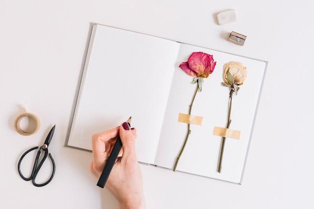 Ein weibliches schreiben mit bleistift auf notizbuch mit den trockenen rosen fest auf weißer seite