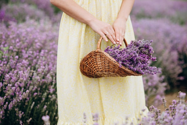 Ein weidenkorb mit frisch geschnittenen lavendelblüten in den händen von frauen in einem kleid inmitten eines feldes von lavendelbüschen. das konzept von spa, aromatherapie, kosmetologie. weicher selektiver fokus.