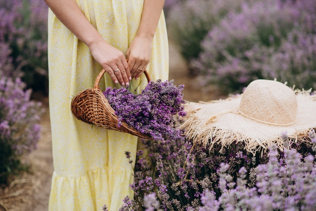 Ein weidenkorb mit frisch geschnittenen lavendelblüten und ein hut in den händen von frauen in einem kleid inmitten eines feldes von lavendelbüschen. das konzept von spa, aromatherapie, kosmetologie. weicher selektiver fokus.