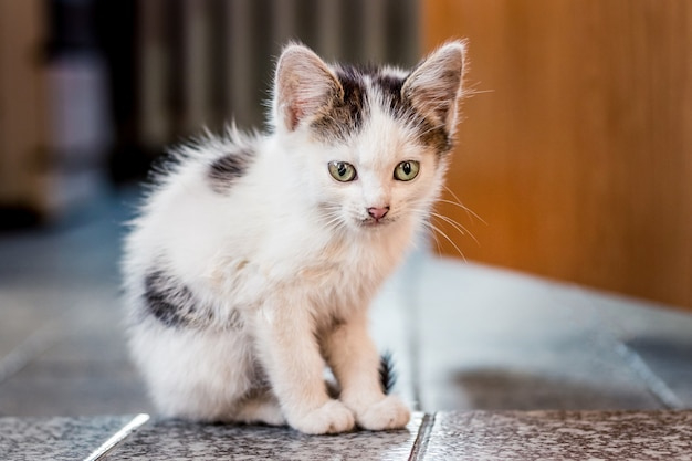 Ein weiß geflecktes kätzchen sitzt auf dem boden im raum