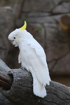 Ein weißer papagei