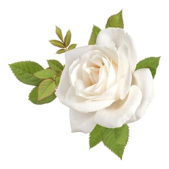 Ein weißer rosenblütenkopf mit blättern lokalisiert auf weißem ausschnitt