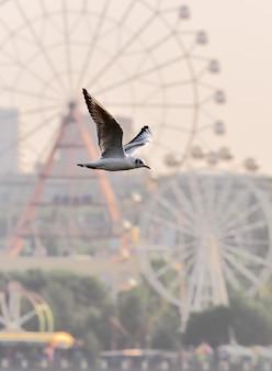 Ein weißer vogel mit ausgebreiteten flügeln im flug vor dem verschwommenen hintergrund eines riesenrades