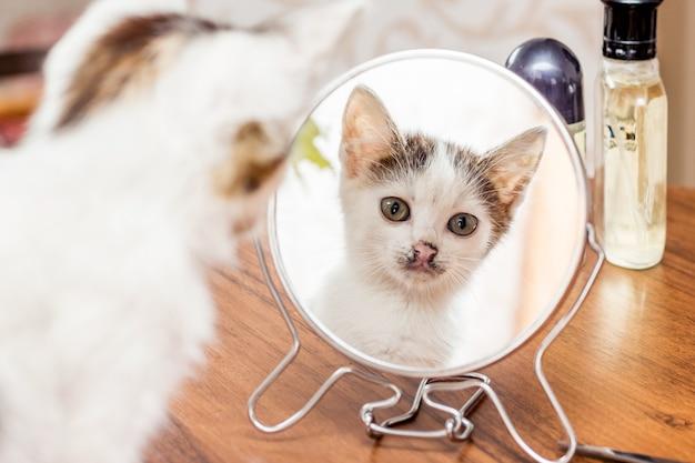 Ein weißes kätzchen schaut morgens nach einem traum in den spiegel