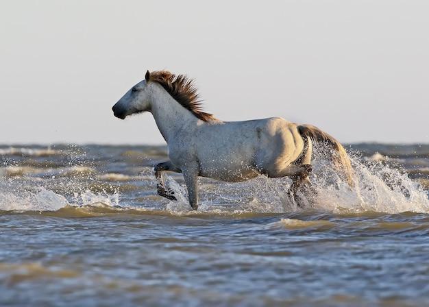 Ein wildes weißes pferd steht auf einer sandbank am ufer des schwarzen meeres