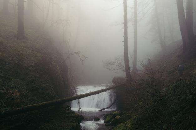 Ein winziger wasserfall in einem gruseligen dunklen wald