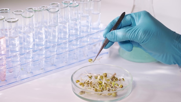Ein wissenschaftler in einem labor analysiert den boden und die pflanzen im inneren, um die pflanzen-dna zu sammeln. konzept: analyse, dna, bio, mikrobiologie, augmented reality, biochemie, immersive technologie