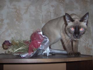 Ein wold pussycat