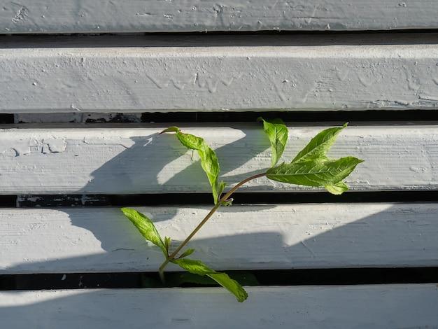 Ein zweig einer grünen pflanze brach durch die holzbretter. das konzept des wunsches zu leben.