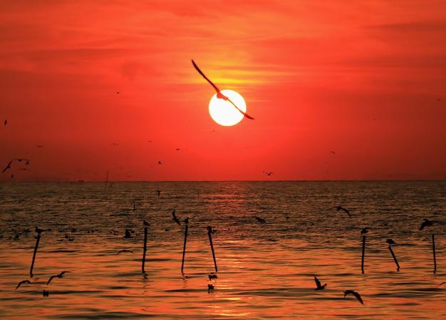Eindrucksvolle ansicht des glänzenden aufgehende sonne mit dem schattenbild einer fliegen-seemöwe auf dem golf von thailand