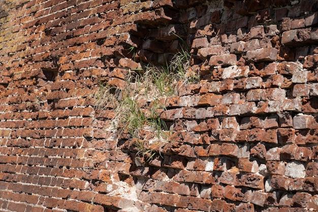 Eine alte backsteinmauer mit einem wachsenden gras darauf.