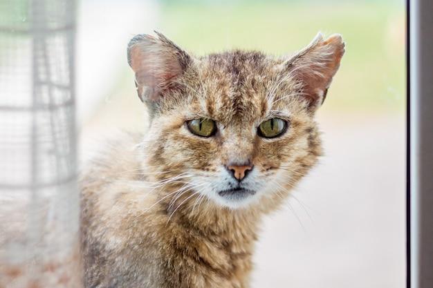 Eine alte katze schaut ins fenster und bittet ihn, den raum betreten zu dürfen