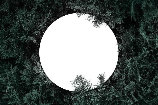 Eine beschaffenheit der pelzbaumaste für eine weihnachtskarte