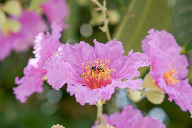 Eine biene auf rosa und lila blumen