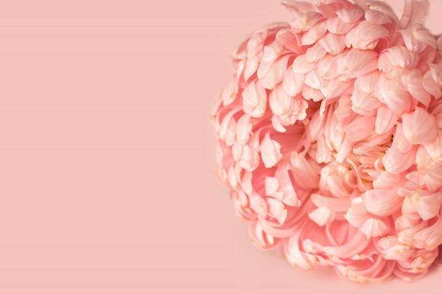 Eine blütenknospe einer einzelnen asterpfingstrose formte zartes rosa
