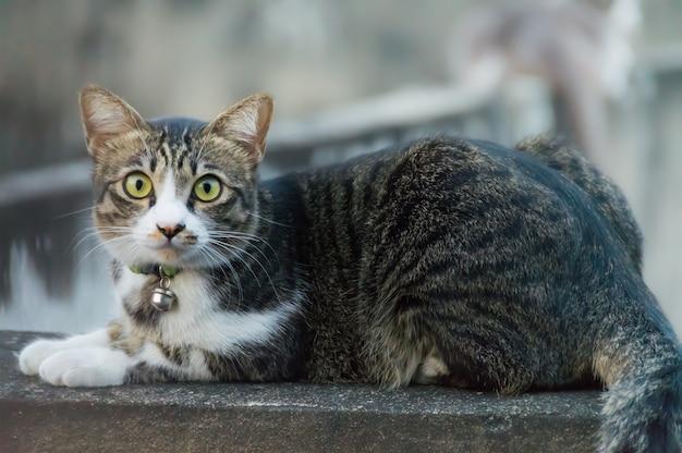 Eine braune katze, die auf einer betonmauer, schauend mit misstrauischen augen sitzt.