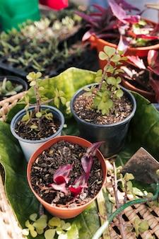 Eine draufsicht auf topfpflanzen im korb