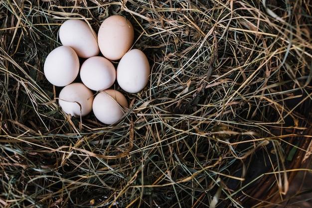 Eine draufsicht des frischen hühnerei vom nest