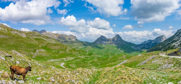 Eine einsame kuh genießt die malerische berglandschaft