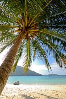 Eine einsame palme auf einer einsamen tropischen insel.