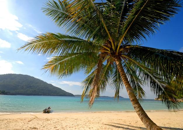 Eine einsame palme und ein boot auf einer leeren tropeninsel, malaysia.
