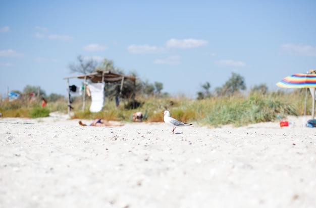 Eine einsame weiße möwe sitzt an einem sandstrand vor dem hintergrund eines verlassenen strandes