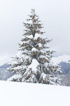 Eine einzelne tanne mit viel schnee bedeckt
