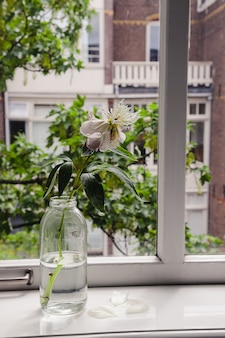 Eine einzelne verwelkte weiße pfingstrose in einer glasflasche mit gefallenen blütenblättern auf einem fensterbrett an einem bewölkten tag