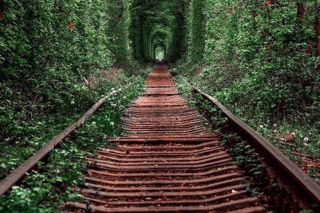 Eine eisenbahn im frühlingswald. tunnel der liebe, grüne bäume und die eisenbahn