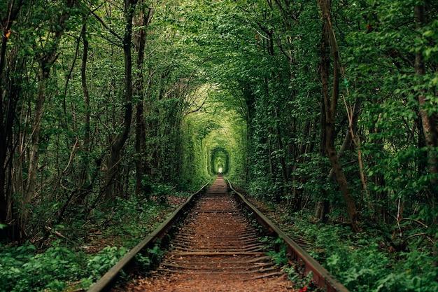Eine eisenbahn im frühlingswaldtunnel der liebe
