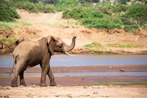 Eine elefantenfamilie am ufer eines flusses mitten im nationalpark