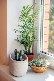 Eine fensterbank mit topfkakteen, sukkulenten und blattpflanzen