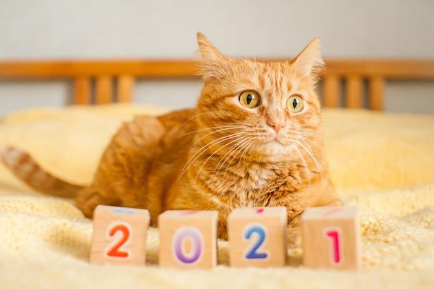 Eine fette ingwerkatze und die nummern 2021 aus kinderwürfeln auf einer gelben strickdecke. neujahr