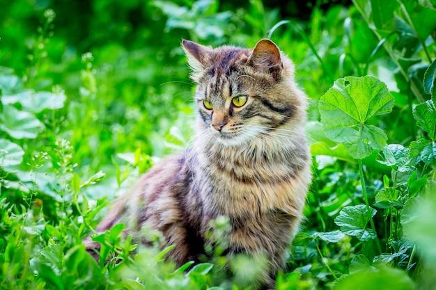 Eine flauschig gestreifte katze sitzt im gras und schaut zur seite
