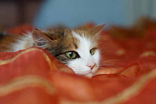 Eine flauschige beschmutzte hauskatze mit grünen augen liegt auf einer orange decke. die katze schaut spielerisch weg. erweiterte pupillen.