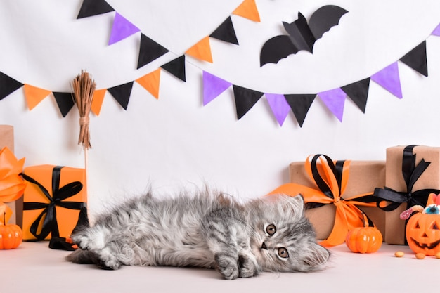 Eine flauschige graue katze liegt im stil von halloween. halloween-grußkarte