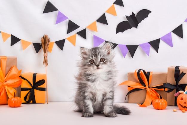 Eine flauschige graue katze sitzt im stil von halloween halloween grußkarte