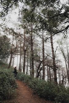 Eine frau, die im dschungel des regenwaldwaldes wandert