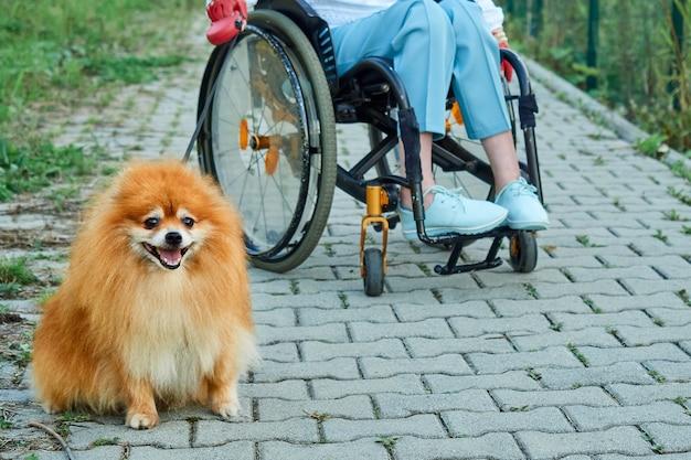 Eine frau im rollstuhl geht mit ihrem hund im freien spazieren. internationaler tag der menschen mit behinderungen
