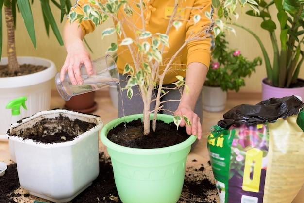 Eine frau in einem gelben pullover, der zimmerpflanzen umpflanzt und hausgemachte blumen mit einer spritzpistole besprüht.