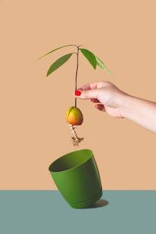 Eine frau pflanzt eine avocado aus einem gekeimten samen in einen topf