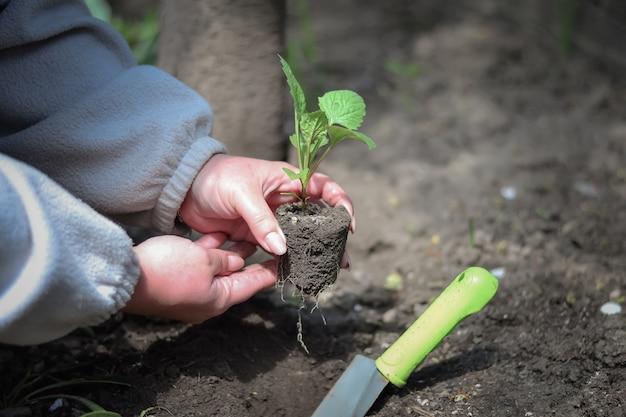 Eine frau pflanzt einen sämling auf offenem boden und bedeckt ihn mit erde
