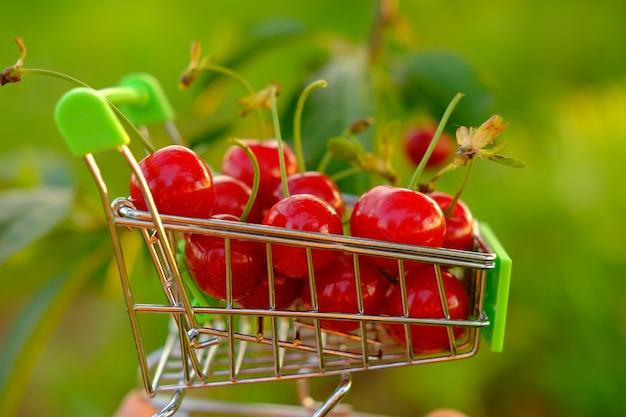 Eine frauenhand hält einen mini-einkaufswagen in der hand und trägt karren entlang der kirschbäume