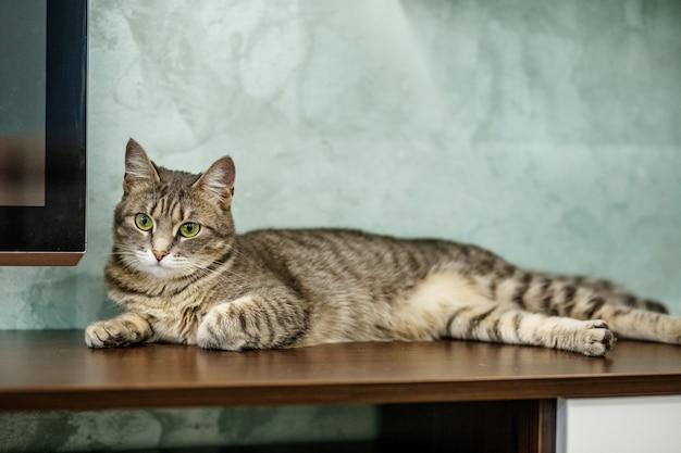 Eine gestreifte katze ist im raum.