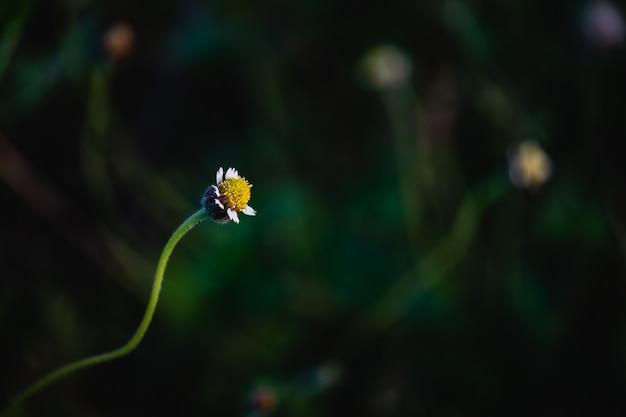Eine grasblume mit dunkelgrünem hintergrund