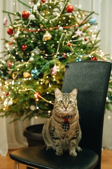 Eine graue getigerte hauskatze in einer krawatte sitzt unter einem geschmückten weihnachtsbaum