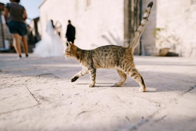 Eine graue katze geht an braut und bräutigam auf einem unscharfen hintergrund vorbei