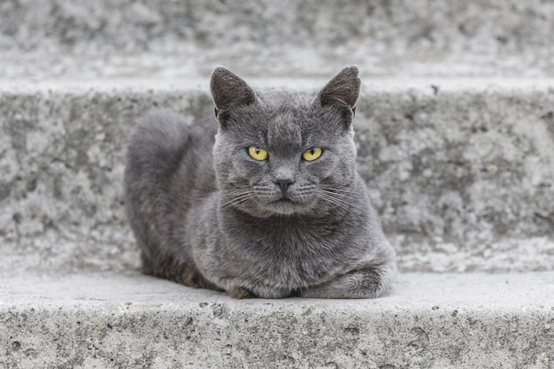 Eine graue katze mit gelben augen sitzt auf der betontreppe des hauses