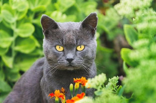 Eine graue katze mit gelben augen sitzt in einem garten in einem blumenbeet